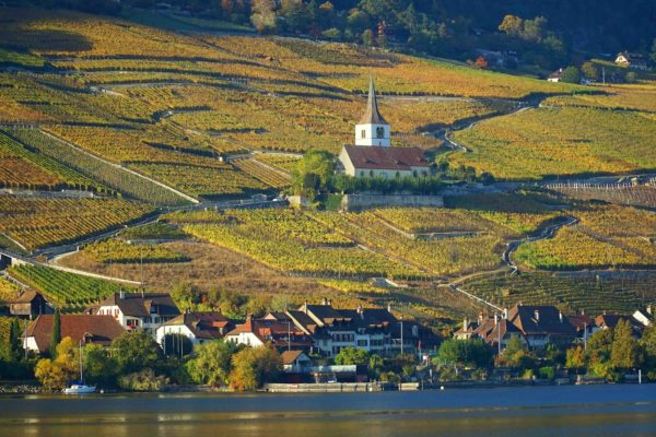 vue sur les vignes depuis lac de Bienne