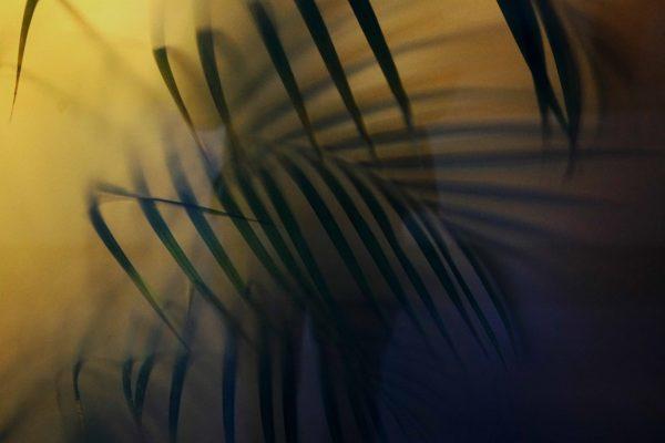 feuilles -  leaves artistic work